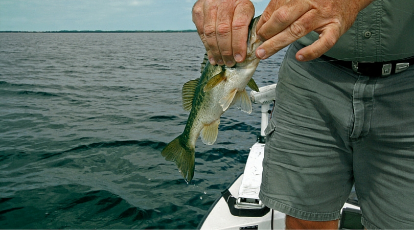 The best bass fishing on lake george st johns river for St augustine fishing spots