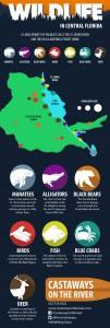 wildlife-info