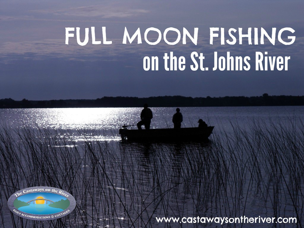 Full moon fishing on the st johns river for Lunar fishing times