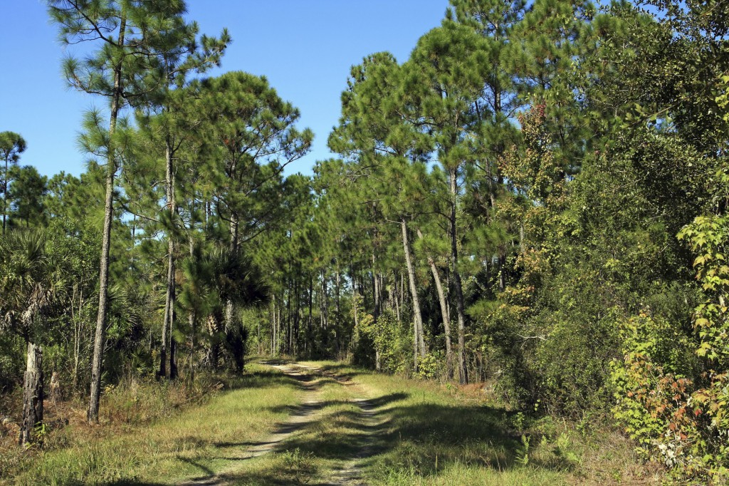 hiking the Florida National Scenic Trail