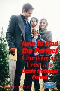 Christmas tree Ocala National Forest