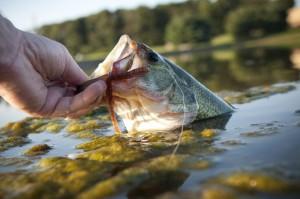best fishing bait st johns river