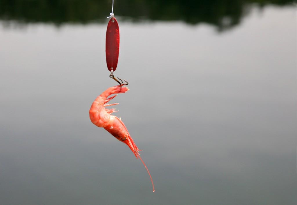 How to Hook a Shrimp