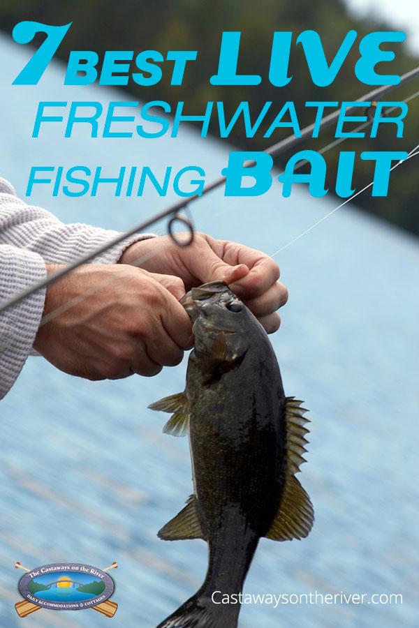 the 7 best live freshwater fishing bait, Fishing Bait