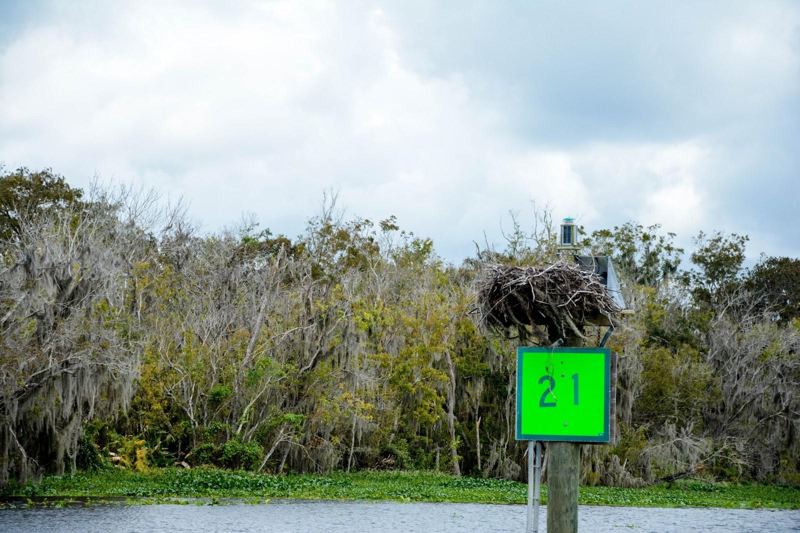 bird nest on the st. johns river